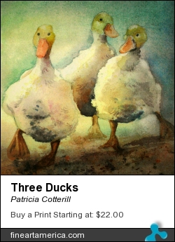 Three Ducks by Patricia Cotterill - Painting - Warecolor