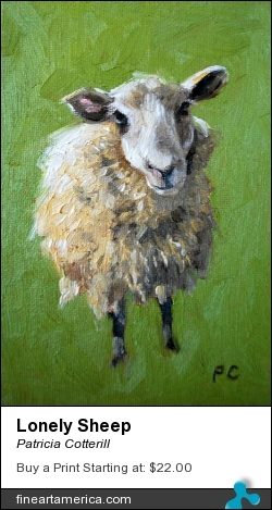 Lonely Sheep by Patricia Cotterill - Painting - Oil On Canvas