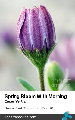 Spring Bloom With Morning Dew by Eddie Yerkish - Photograph - Photograph