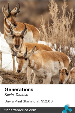 Generations by Kevin  Dietrich - Photograph
