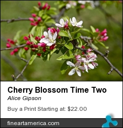 Cherry Blossom Time Two by Alice Gipson - Photograph - Photograph