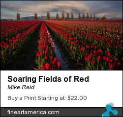 Soaring Fields Of Red by Mike Reid - Photograph - Photography
