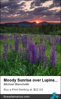 Moody Sunrise Over Lupine Field by Michael Blanchette - Photograph