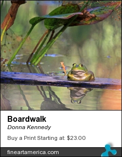 Boardwalk by Donna Kennedy - Photograph - Photography