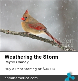 Weathering The Storm by Jayne Carney - Photograph - Photography