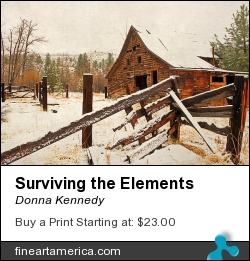 Surviving The Elements by Donna Kennedy - Photograph - Photograph-textured