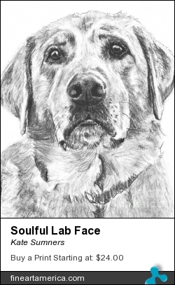 Soulful Lab Face by Kate Sumners - Drawing - Drawing