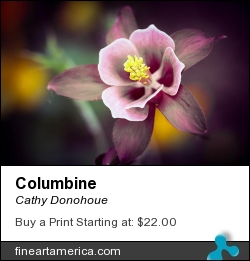 Columbine by Cathy Donohoue - Photograph - Photography
