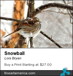 Snowball by Lois Bryan - Photograph - Photography