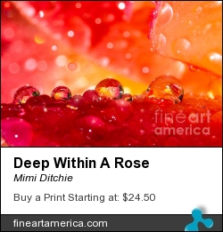 Deep Within A Rose by Mimi Ditchie - Photograph - Photograph