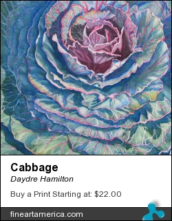 Cabbage by Daydre Hamilton - Painting - Watercolor