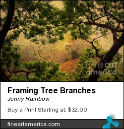 Framing Tree Branches by Jenny Rainbow - Photograph - Photography