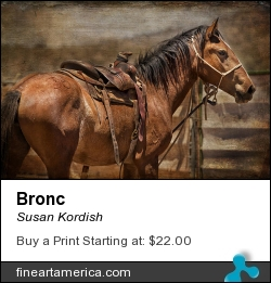 Bronc by Susan Kordish - Photograph - Photography/digital Art