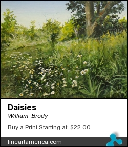 Daisies by William  Brody - Painting - Acrylic On Board