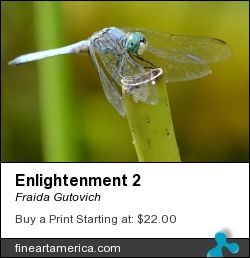 Enlightenment 2 by Fraida Gutovich - Photograph - Photography