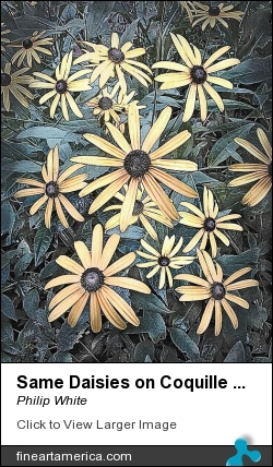 Same Daisies On Coquille Board by Philip White - Painting - Color Pigments On Coquille