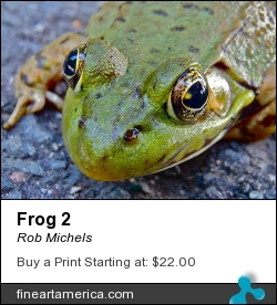Frog 2 by Rob Michels - Photograph - Digital Photos