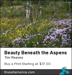 Beauty Beneath The Aspens by Tim Reaves - Photograph - Photography
