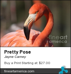 Pretty Pose by Jayne Carney - Photograph - Photography