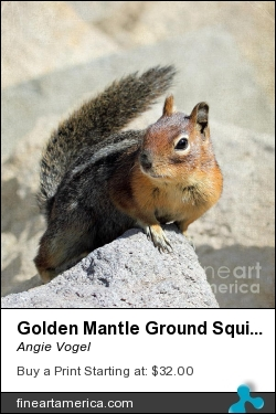 Golden Mantle Ground Squirrel by Angie Vogel - Photograph - Photography / Digital Art