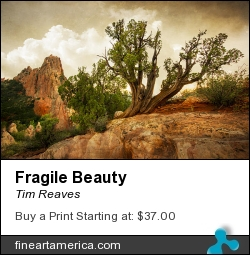 Fragile Beauty by Tim Reaves - Photograph - Photography