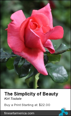 The Simplicity Of Beauty by Kirt Tisdale - Photograph - Photograph