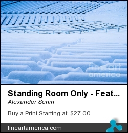 Standing Room Only - Featured 3 by Alexander Senin - Photograph