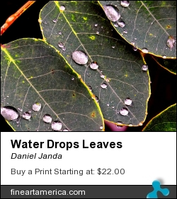 Water Drops Leaves by Daniel Janda - Painting - Digital Painting