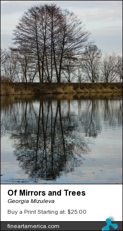 Of Mirrors And Trees by Georgia Mizuleva - Photograph - Fine Art Photograph