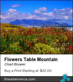 Flowers Table Mountain by Charl Bruwer - Photograph - Photograph