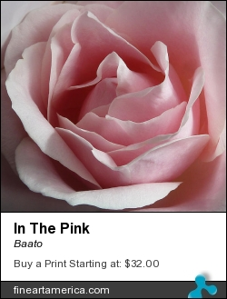In The Pink by Baato - Photograph