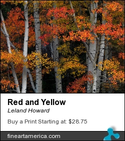 Red And Yellow by Leland Howard - Photograph - Fine Art Nature Photography