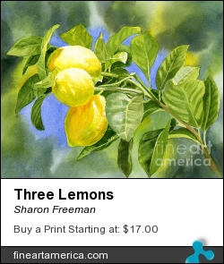 Three Lemons by Sharon Freeman - Painting - Watercolor On Paper