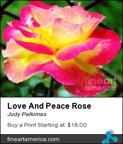 Love And Peace Rose by Judy Palkimas - Photograph - Photography,photograph