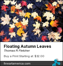 Floating Autumn Leaves by Thomas R Fletcher - Photograph - Photography