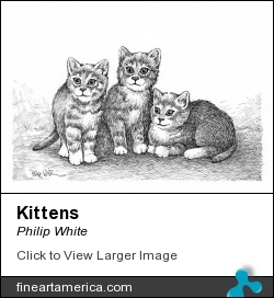 Kittens by Philip White - Drawing - Ink