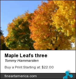 Maple Leafs Three by Tommy Hammarsten - Photograph - Very High Resolution