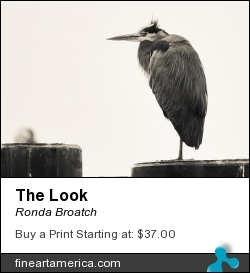The Look by Ronda Broatch - Photograph - Photography