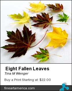 Eight Fallen Leaves by Tina M Wenger - Photograph - Prints Of Photographs