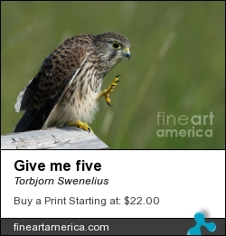 Give Me Five by Torbjorn Swenelius - Photograph - Photography