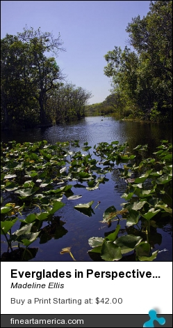 Everglades In Perspective - Florida by Madeline Ellis - Photograph - Photography