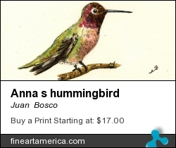 Anna S Hummingbird by Juan Bosco - Painting - Watercolor On Paper