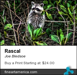 Rascal by Joe Bledsoe - Photograph - Digital Photographs