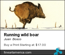 Running Wild Boar by Juan Bosco - Painting - Watercolor On Paper