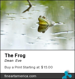 The Frog by Dean  Eve - Photograph - Photograph