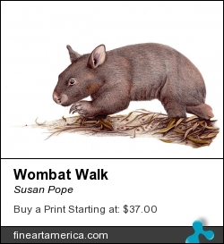 Wombat Walk by Susan Pope - Drawing - Colored Pencil On Film