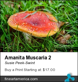Amanita Muscaria 2 by Susie Peek-Swint - Photograph