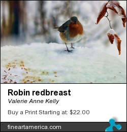 Robin Redbreast by Valerie Anne Kelly - Photograph - Photography