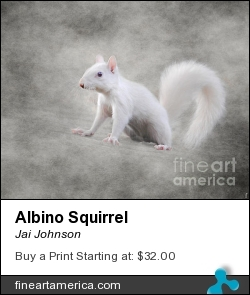 Albino Squirrel by Jai Johnson - Photograph - Artistic Photography