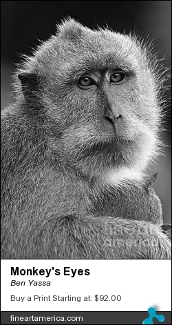 Monkey's Eyes by Ben Yassa - Photograph